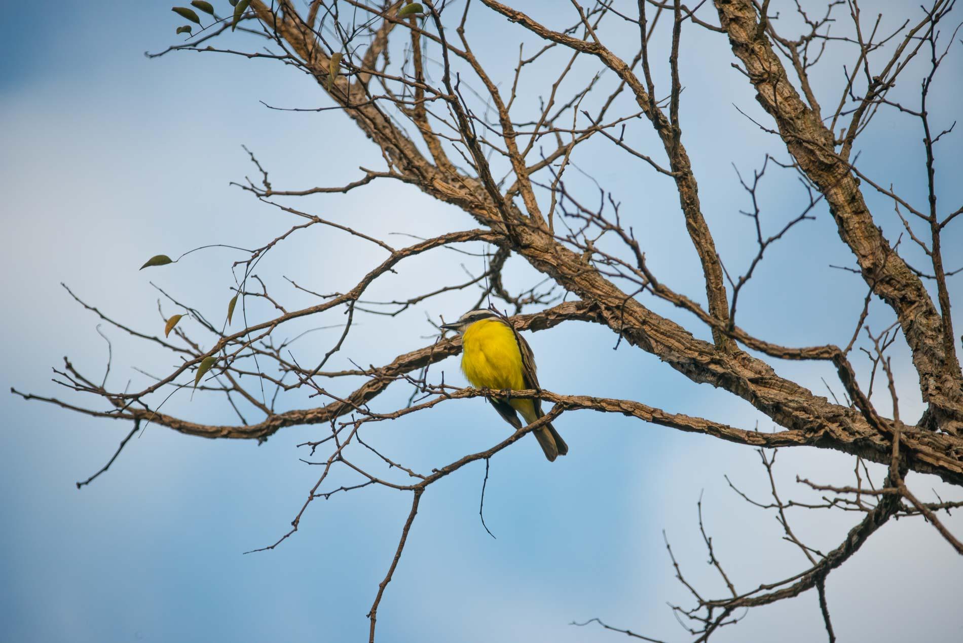 pantanal-birds