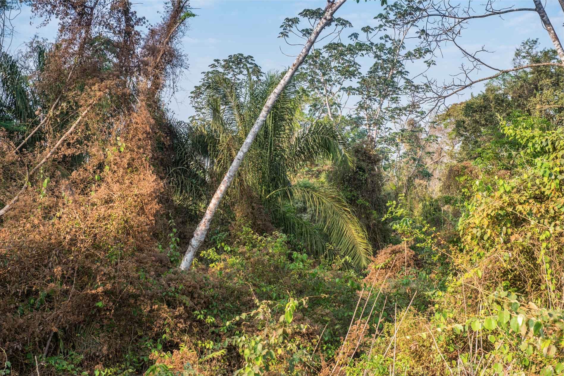 foresta in bolivia viaggio